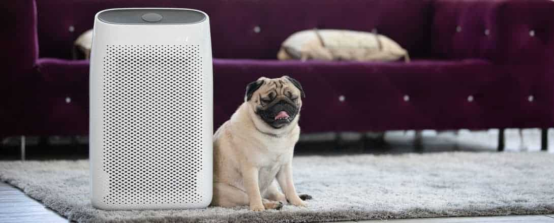 Dog with air purifier