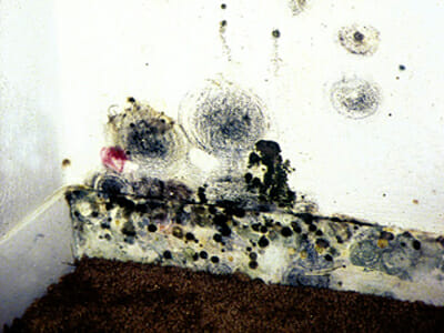 Mold growing on a wall